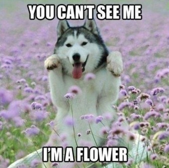 you cant see me